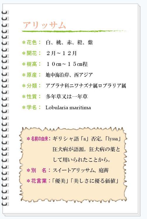 アリッサム花MEMO.jpg