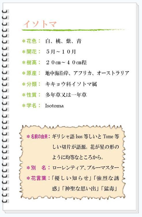 イソトマ花MEMO.jpg