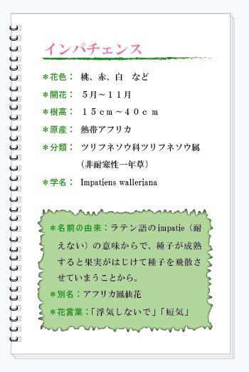 インパチェンス花MEMO.JPG