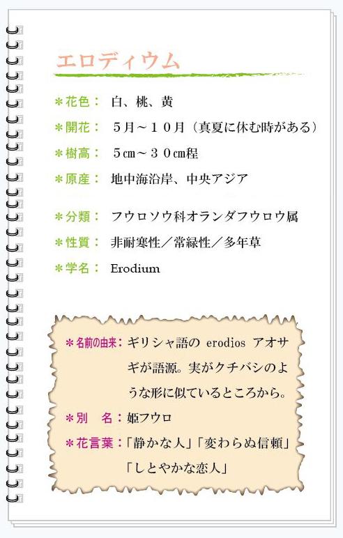 エロディウム花MEMO.jpg