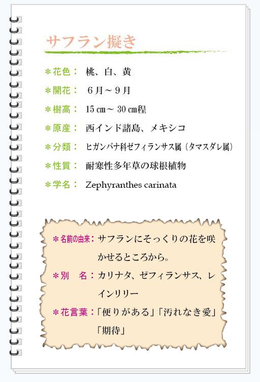 サフラン擬き花MEMO.jpg