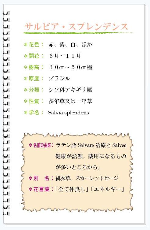 サルビア花MEMO.jpg