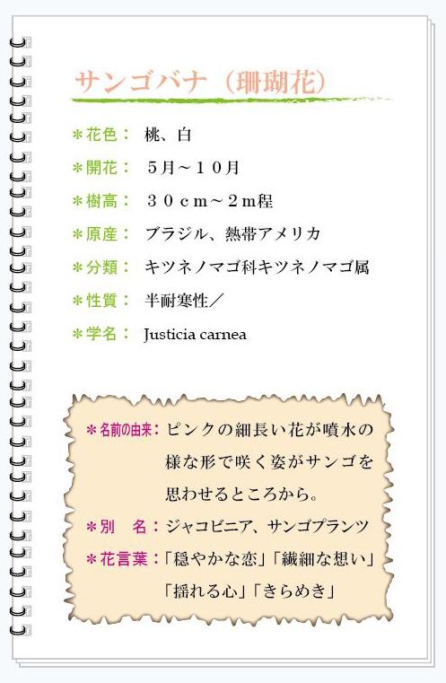 サンゴバナ花MEMO.jpg