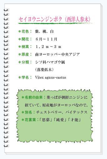 セイヨウニンジンボク花MEMO.JPG