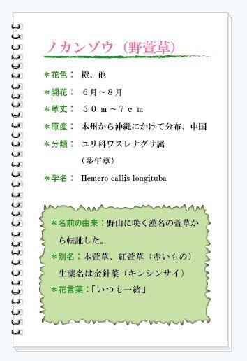 ノカンゾウ花MEMO.JPG