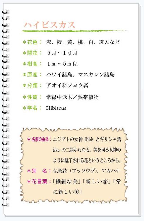ハイビスカス花MEMO.jpg