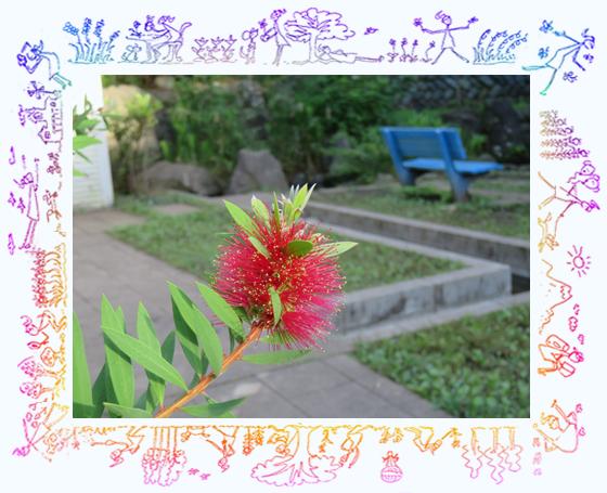 ブラシノキ01.jpg