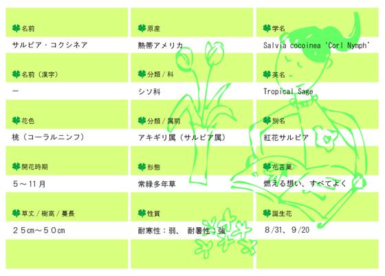 今日の花MEMOイラレ入り560サルビアコクシネア.jpg