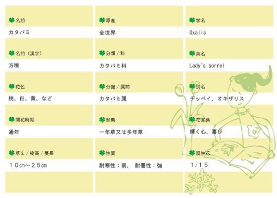 今日の花MEMOカタバミ560.jpg