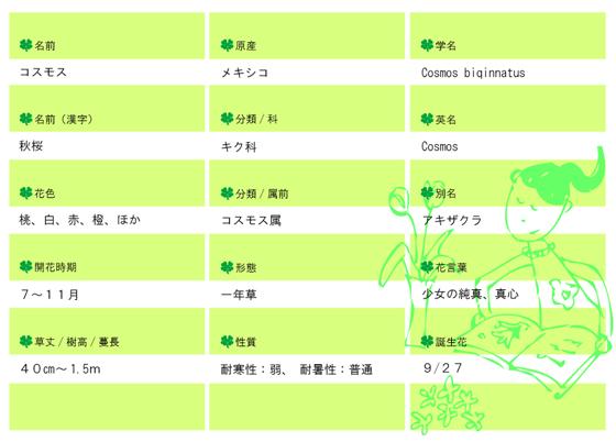 今日の花MEMOコスモス.jpg