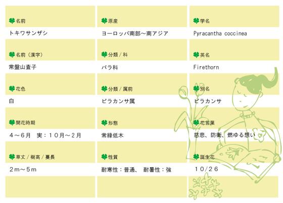 今日の花MEMOトキワサンザシ560.jpg