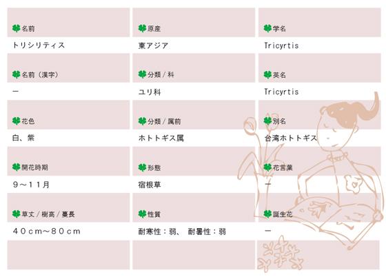今日の花MEMOトリシリティス560.jpg
