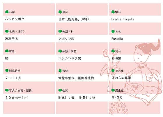 今日の花MEMOハシカンボク560.jpg