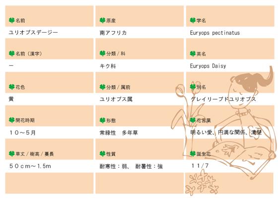 今日の花MEMOユリオプスデージー.jpg