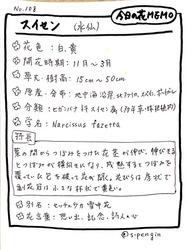 108スイセン.JPG