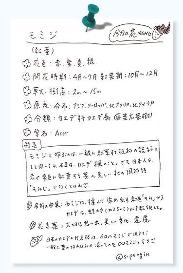 131モミジ今日の花MEMO.jpg