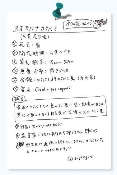 153オオキバナカタバミ.jpg