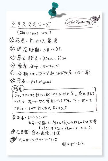 155クリスマスローズ.jpg