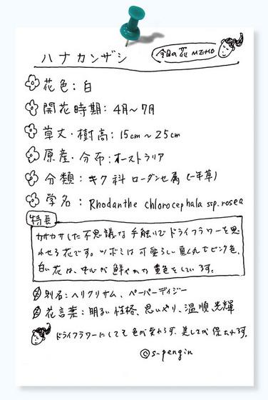 157ハナカンザシ花MEMO.jpg