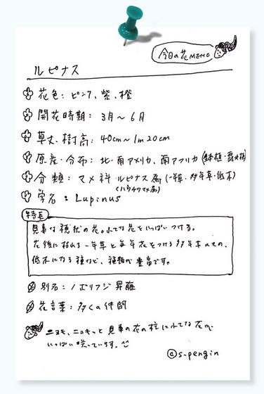 158ルピナス花MEMO.jpg