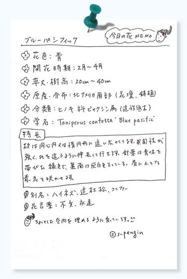 159ブルーパシフィック花MEMO.jpg