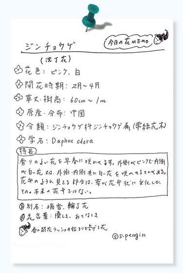162沈丁花花MEMO.jpg
