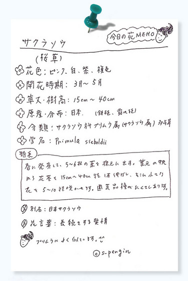 163サクラソウ花MEMO.jpg