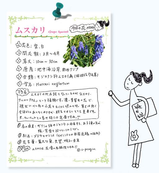 184ムスカリ花MEMO.jpg