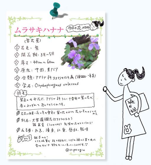 188ムラサキハナナ花MEMO.jpg