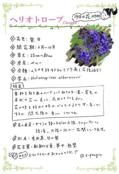 189ヘリオトロープ花MEMOもと.jpg