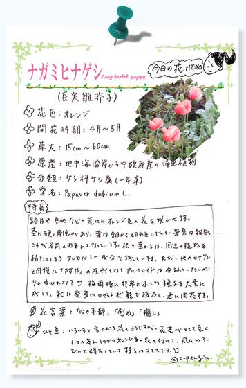 211ナガミヒナゲシ花MEMO.jpg
