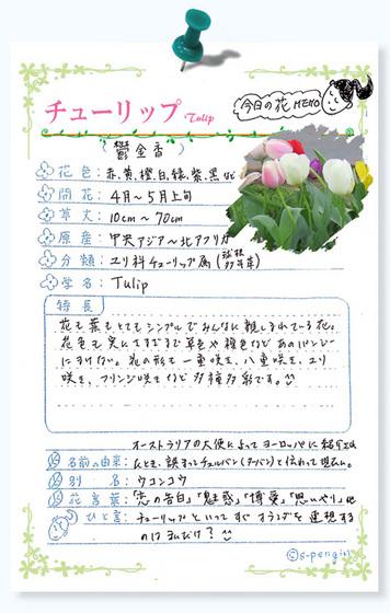 213今日の花MEMOチューリップ.jpg