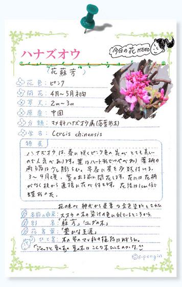 215今日の花MEMOハナズオウ.jpg