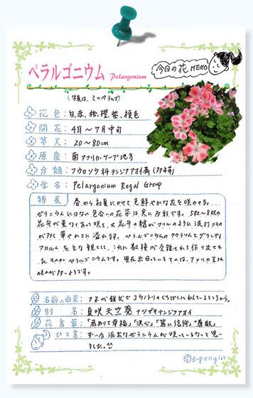 217今日の花MEMOペラルゴニウム.jpg
