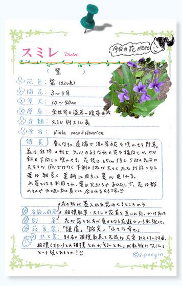 218今日の花MEMOスミレ.jpg