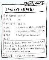 フウセンカズラMEMO.jpg