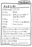 ヤツデMEMO.jpg