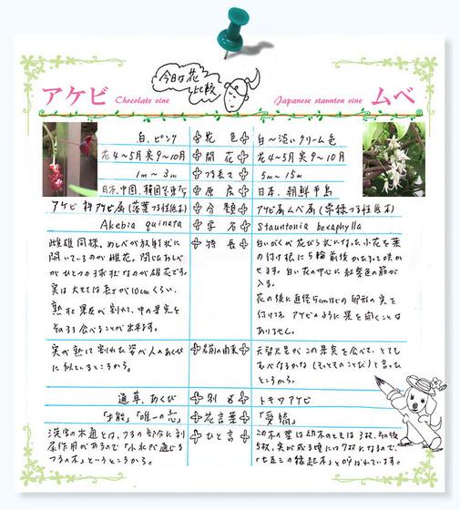 今日の花MEMO比較tougou犬.jpg
