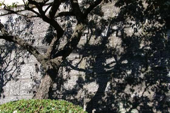 梅の木03 - コピー.jpg