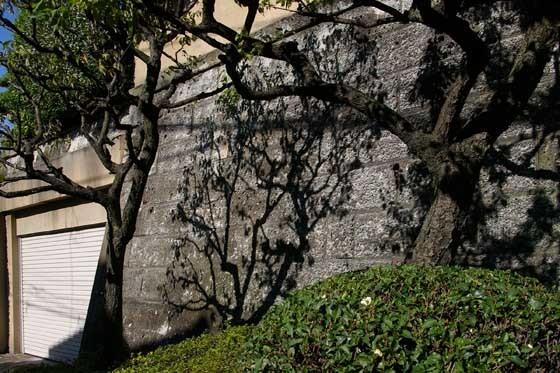 梅の木04 - コピー.jpg