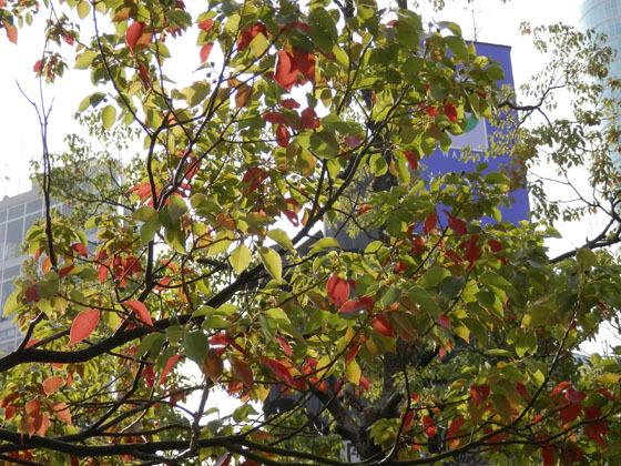 赤い葉っぱ03 - コピー.jpg
